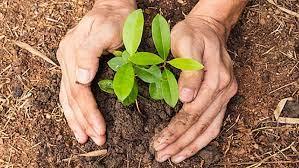 आज वातावरण दिवसमा शान्ति समाजद्वारा वृक्षरोपण